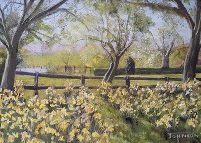 Daffodils - Boothby Graffoe Church